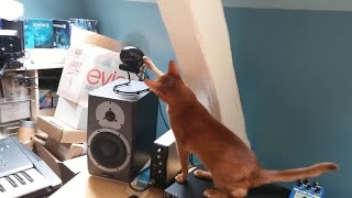 EPIC LAUGH Funniest Scared Cat Home 2020 Best of Funny cat Videos #5