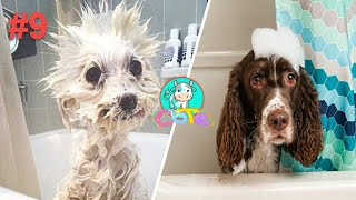 cute animals dogs + bath time + Cute dogs take a shower + ASMR + music 2020  #9