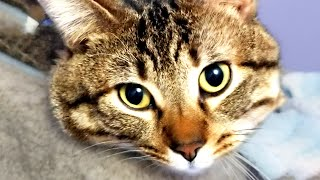 Must Watch Cat Videos of the Week! Funny and Cute Cats 🐱