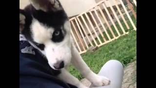 dogs and birds funny vines videos 14032014