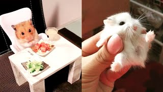 Funny Hamsters videos 💗cute animals compilation 💗