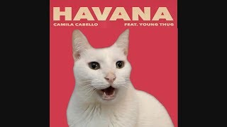 HAVANA – Camila Cabello by CATS | Despacito | Shape of you | + More BEST Hits – Cat Parody