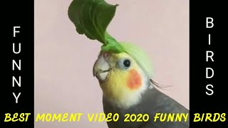 Try Not To Laugh, Best Funny Birds Parrot 2020