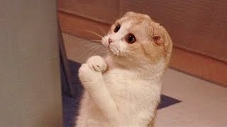 OMG So Cute Cats ♥ Best Funny Cat Videos 2020 #24