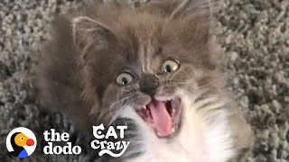 Kitten Who Wasn't Supposed To Live Is The Feistiest Girl Now | The Dodo Cat Crazy