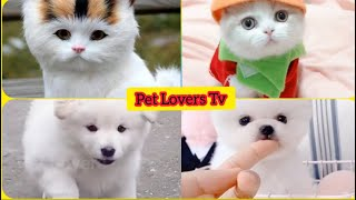 Cute Dogs & Cats- Cute and Funny Dog, Cat Videos Compilation || Pet Information || Pet Lovers Tv