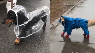 Cute Dogs Running Around In Their Raincoats!