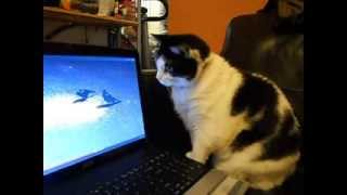 Very Funny, cat watching the birds video on youtube, see the reaction!