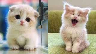 Cute Kittens Doing Funny Things 2020 🐱 #6  Cutest Cats