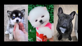 😍Cute dogs and Cats🐶 Funny Animal Videos Compilation😁 Adorable Baby Animals🐣Pomeranian puppy
