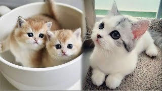 ♥Cute Kittens Doing Funny Things 2019♥ #2  Cutest Cats