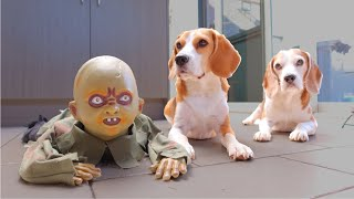 Dogs vs Zombie Baby Halloween Prank : Funny Dogs Louie & Marie