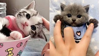 😍 Cute is Not Enough – Cute Kittens In The World #6 | CuteVN Animals