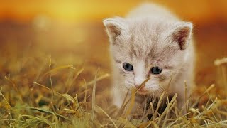 Beautiful Cat, Cute Cat, Funny Cat, Baby Cat, Baby Cat Losing Mother,Pets Collective
