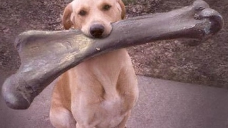 I CHALLENGE YOU NOT TO LAUGH – Funny DOG compilation