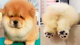 Cutes dogs   Cutest dog in the world   Cute dogs clips 2020. NELTV.