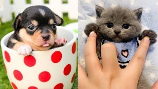 💗Aww – Funny and Cute Dog and Cat Compilation 2020💗 #69 – CuteVN