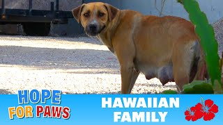 We were told this homeless dog had 4 puppies – we found more!!!  :-)