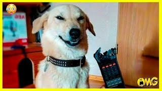 Dank Memes 🟡 Funny Cats & Dogs video compilation – Funny & cute pets | PAWS LAND #36