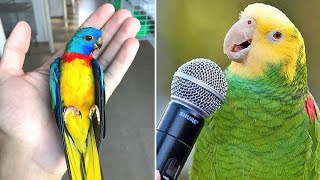 Baby Animals 🔴 Funny Parrots and Cute Birds Compilation (2020) Loros Adorables Recopilación #8