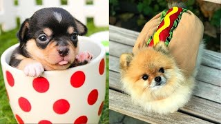Baby Dogs 😍 Cute and Funny Dogs Compilation #3 | Cute Puppies