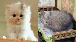 😍 Supper Cute Kittens In The World #16 – Cute VN