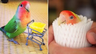 Funny Parrots Videos Compilation cute moments of the animals – Cutest Parrots #4