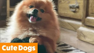 Cute Dogs That Make You AWWW | Funny Pet Videos