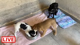 The puppies and the mother are safe in my shelter and they are very hungry – Takis shelter