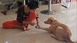 Wow Very funny dog video! beautiful girl make up her very cute dog lucky.