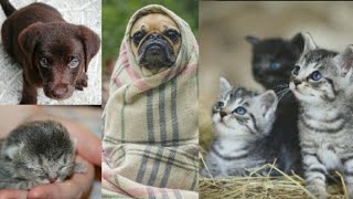 Cute and Funny Animals Compilation 2020 | Cute Birds and Animals | Cutest and Heart Warming animals