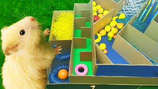 My Funny Hamster – DIY 5 level Maze for Hamsters and Friend White Dwarf Hamster