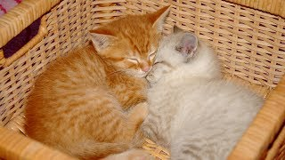 Adorable Kittens Cuddling – Cute Cat Videos Compilation 2019