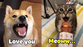 OMG! These Cats 😻 & Dogs 🐶 Speak English! – Pets Language | Cute VN