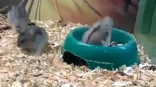 Funny Hamsters videos | Cute and funny moments of the animals