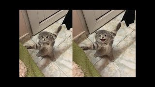 🤣 These Cats Are Stuck 🐱 Funny and Cute Cats Compilation 2020 – CuteVN