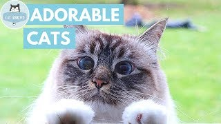 These Cute Cats Will Melt Your Heart!