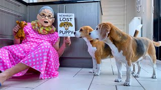 Funny Dogs vs Evil Old Lady Prank : Beagle Dogs Louie & Marie