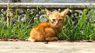 Found poor stray kitten is scaring in the first meeting but cute ginger kitten still come to me