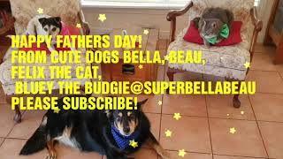 HAPPY FATHERS DAY 2020 FROM CUTE PETS BELLA, BEAU, FELIX AND BLUEY!❤