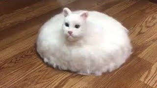 OMG So Cute Cats ♥ Best Funny Cat Videos 2020 #14