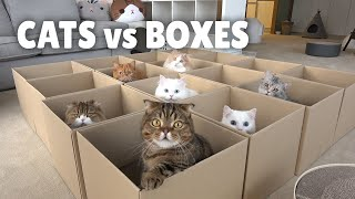 Cats vs Boxes | Kittisaurus
