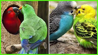 Funny Parrots and Cute Birds Video Compilation Adorable Moments Of the animals #4 – Cutest Parrots