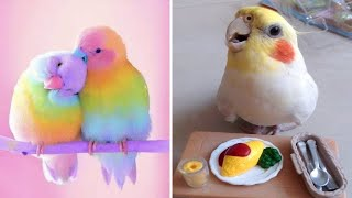 Cute Baby Animals 🔴 Funny Parrots and Cute Birds Compilation (2020) Loros Adorables Recopilación #7