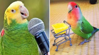 Baby Animals 🔴 Funny Parrots and Cute Birds Compilation (2020) Loros Adorables Recopilación #3
