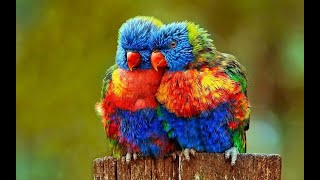 beautiful and funny birds