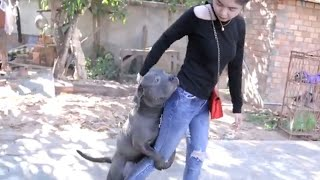 Lovely smart girl Playing Baby Cute Dogs On Rice Fields   How to play with dog & Feed baby dogs #06
