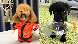 Baby Dogs 2020 – Funny and Cute Dogs Video Compilation 2020