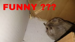 🔴 Funny Hamsters Videos Compilation #1  🔴 Cute and Funny moments of the animals   🔴 cute Pets