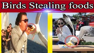 Funny Birds stealing foods/ compilation#1//wilds Animal's planet 1M
